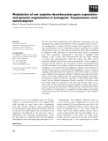 Báo cáo khoa học: Modulation of oat arginine decarboxylase gene expression and genome organization in transgenic Trypanosoma cruzi epimastigotes