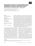 Báo cáo khoa học: Stage-specific expression of Caenorhabditis elegans ribonuclease H1 enzymes with different substrate specificities and bivalent cation requirements