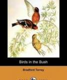 Birds In The Bush  By Bradford Torrey