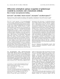 Báo cáo khóa học: Differential carbohydrate epitope recognition of globotriaosyl ceramide by verotoxins and a monoclonal antibody
