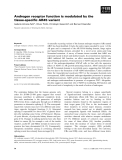 Báo cáo khoa học: Androgen receptor function is modulated by the tissue-specific AR45 variant