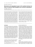 Báo cáo khoa học:  Biochemical and enzymological aspects of the symbiosis between the deep-sea tubeworm Riftia pachyptila and its bacterial endosymbiont