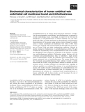 Báo cáo khoa học: Biochemical characterization of human umbilical vein endothelial cell membrane bound acetylcholinesterase
