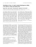 Báo cáo khoa học: Distribution of class I, III and IV alcohol dehydrogenase mRNAs in the adult rat, mouse and human brain