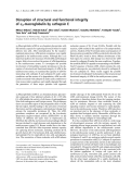Báo cáo khoa học: Disruption of structural and functional integrity of a2-macroglobulin by cathepsin E
