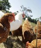 Alignment of poultry sector actors  with avian influenza control