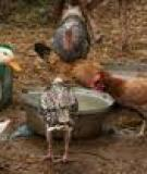 POULTRY NUTRITION AND FEEDING