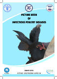 PICTURE BOOK OF INFECTIOUS POULTRY DISEASES