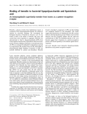 Báo cáo khoa học: Binding of hemolin to bacterial lipopolysaccharide and lipoteichoic acid An immunoglobulin superfamily member from insects as a pattern-recognition receptor