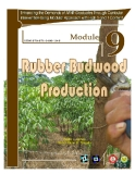 Rubber Budwood Production