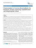 Characterization of mercury bioremediation by transgenic bacteria expressing metallothionein and polyphosphate kinase