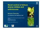 Novel control of lettuce  downy mildew and  anthracnose