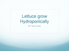 Lettuce grow  Hydroponically
