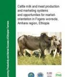 STUDIES ON CATTLE MILK AND MEAT PRODUCTION IN FOGERA  WOREDA: PRODUCTION SYSTEMS, CONSTRAINTS AND  OPPORTUNITIES FOR DEVELOPMENT
