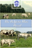 The Belgian Blue  Breed