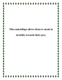 This camouflage allows them to sneak in invisibly towards their prey